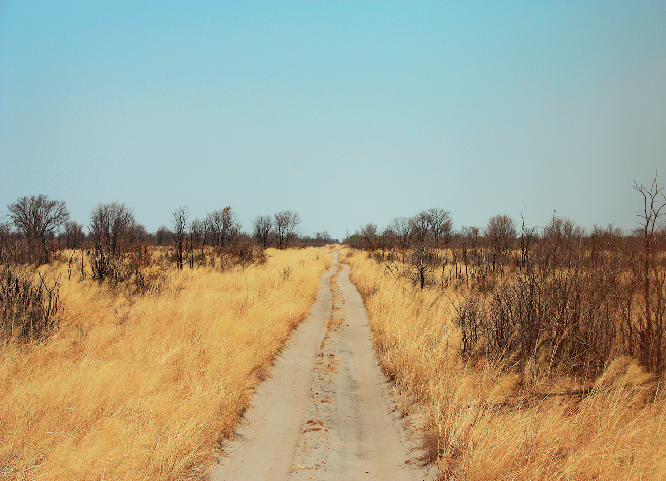 Phot of Road in Chobe National Park