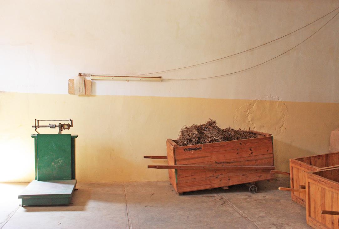 Tobacco Scraps in Viñales, Cuba