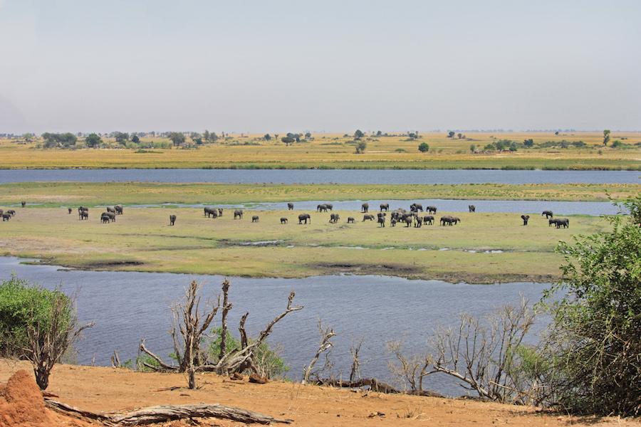African Safari Views