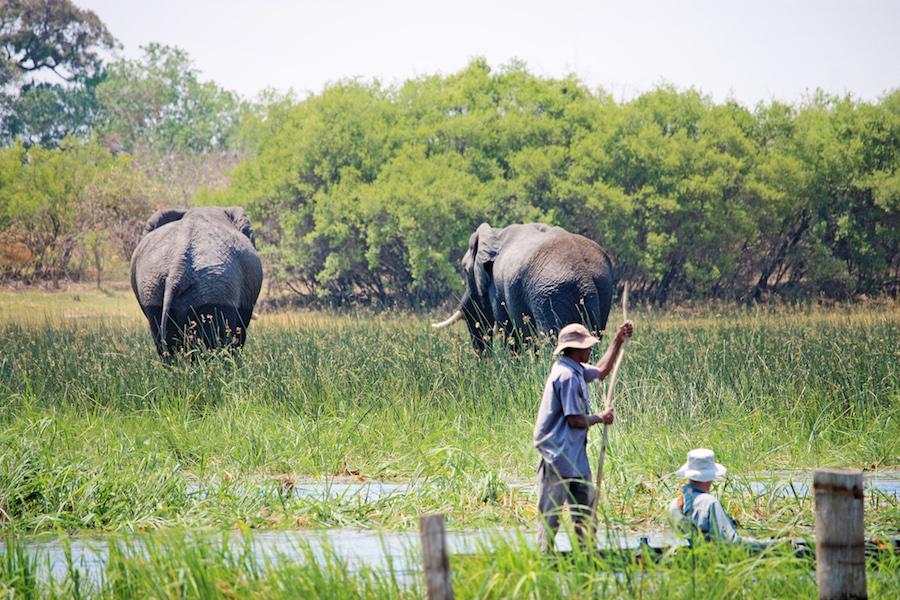 Mokoro ride during African Safari