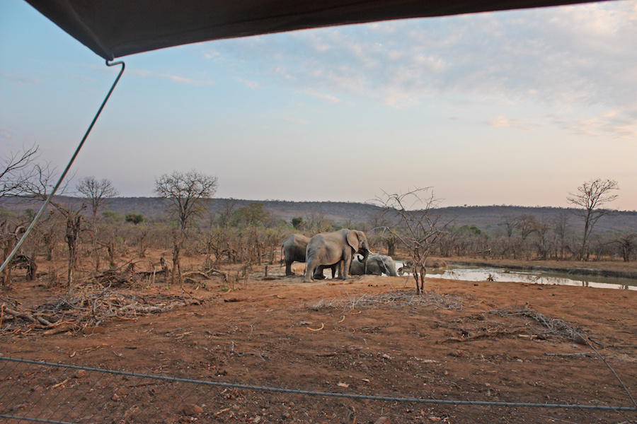 Room with a view African Safari