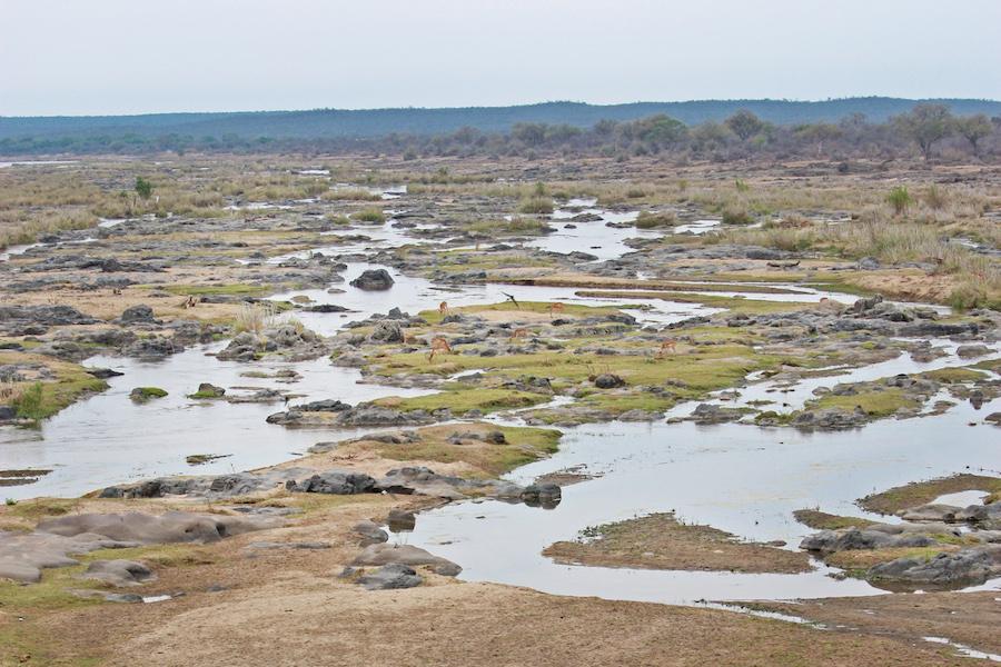 South Africa Safari Landscape