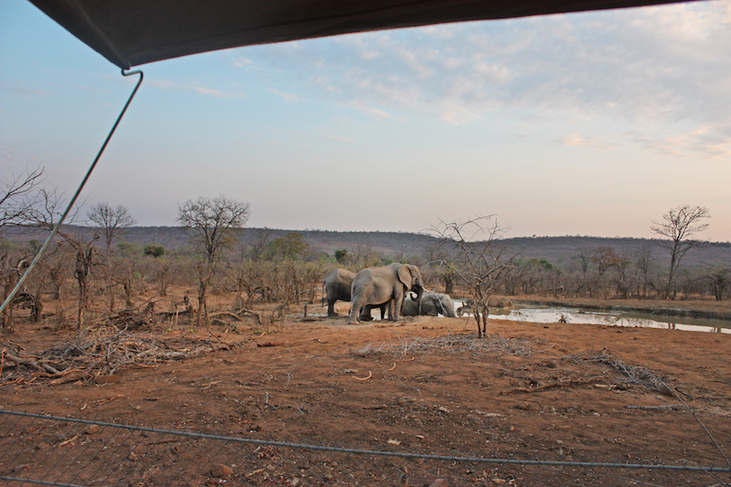 View from our tent in Africa