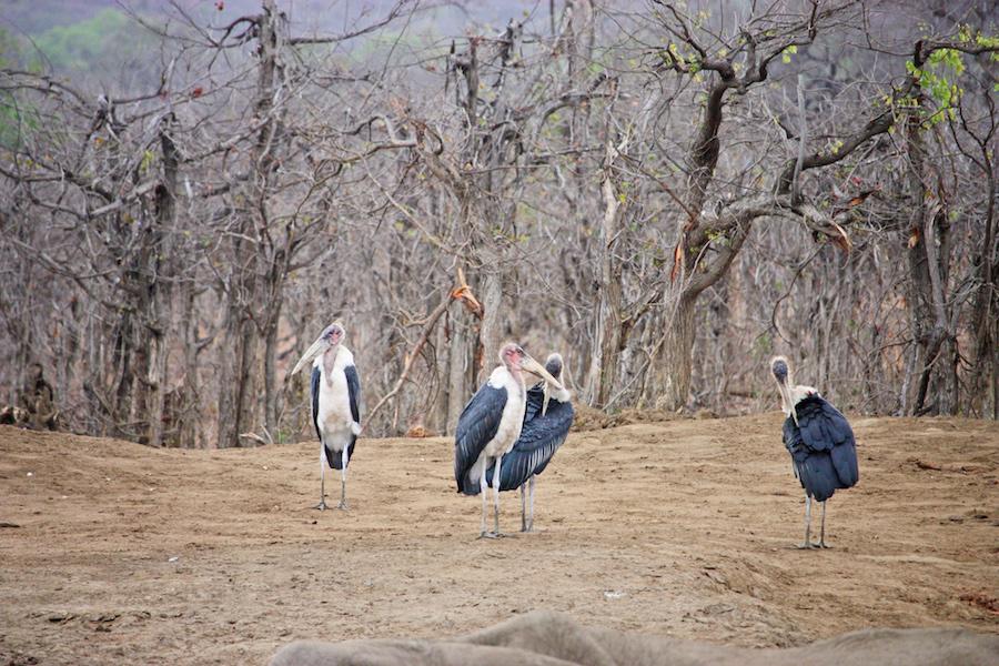 bizarre landscape in Africa