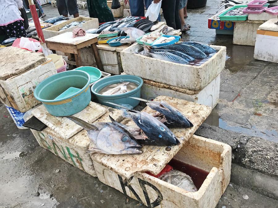 Jimbaran Fish Market Fish Heads