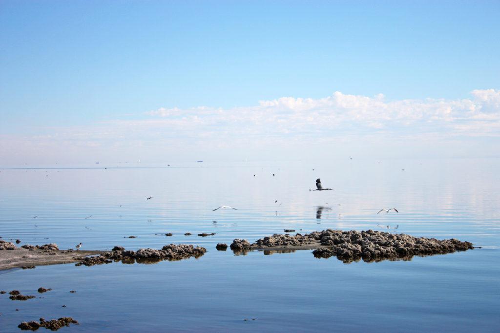California Salton Sea Birds