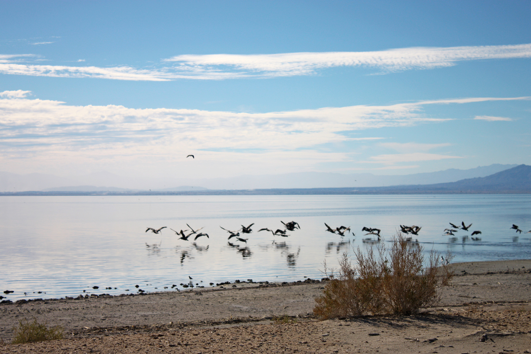 Salton Sea Sunset Birds