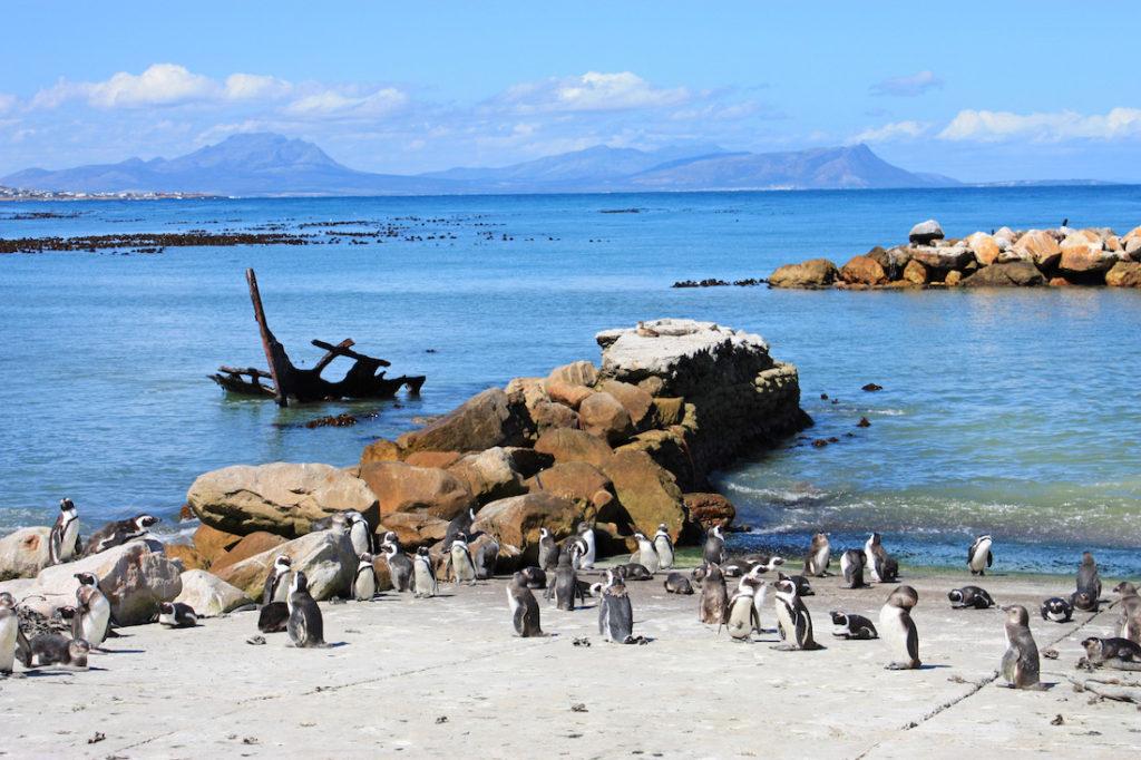 South Africa Bettys Bay Beach 2